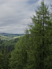 Ae Forest (ronfromkwon) Tags: park forest scotland ae dumfriesandgalloway