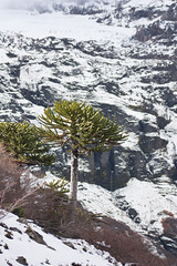 (*natalia altamirano lucas*) Tags: chile nieve sierra sierranevada araucania parquenacionalconguillio nataliaaltamiranolucas