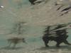 G0061468.jpg (imfaral) Tags: skye unitedstates southcarolina penny dogdayafternoon northcharleston