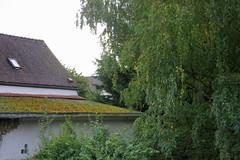 La mousse sur le toit (vendredi 11 octobre 2013, 08:36:20). (Jean-Michel Leroy) Tags: toit vue mousse matin bouleau veneuxlessablons jeanmichelleroy