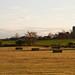 Quiet amber fields