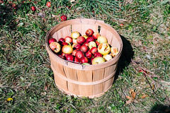 Apples (Conal Gallagher) Tags: orchard apples lenstagger