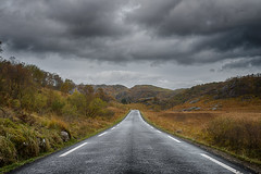 The road home (Tommy Høyland) Tags: road autumn trees fall landscape grey sheep horizon nobody line asphalt distance vibrantcolours heavyclouds notrafic leadinginto