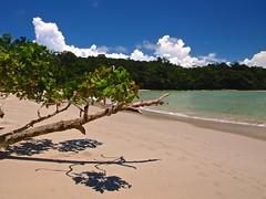 Manuel Antonio 233 (xotico) Tags: naturaleza verde mar costarica natural selva playa animales manuelantonio reserva salvaje xotico xoticosphotos