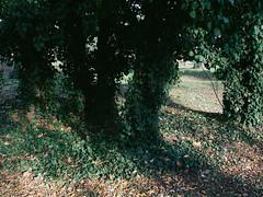 30.10.2013_Jewish_cemetery_Prague-42.jpg (Churechawa) Tags: light shadow color tree composition forest artistic magic mysterious fujifilm tale mystic compact eggleston jeseniky danielpolacek fujifilmf70exr