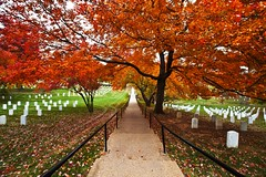 Peaceful (Ausamah) Tags: autumn trees red orange woman usa man sexy green art fall nature beautiful cemetery graveyard leaves yellow sex stone infantry arlington dead soldier photography death virginia photo dc washington bahrain amazing nice war branch colours peace force gulf place purple head military air rip headstone tomb tombstone navy arab fallen seals rest marines resting martyr airforce veteran officer    ausamah alabsi