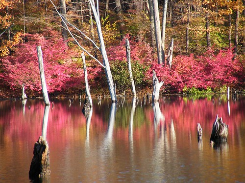 Pink Dead Tree Reflection