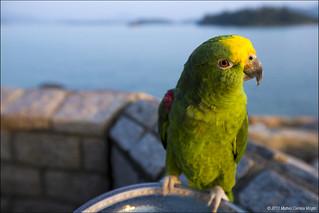 Parrot in Sai Kung - Hong Kong