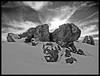 THE DARING ROCKS (LitterART) Tags: schnee winter snow mountains alps abandoned nature austria österreich rocks frost stones peak berge steine alpen peaks baum steiermark styria felsen lonesome gipfel lonesometree stubalpe