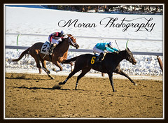 Flamingo Lane (EASY GOER) Tags: horses horse snow ny cold sports racetrack race canon track competition racing aqueduct 7d athletes races sporting thoroughbred equine thoroughbreds