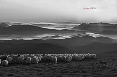 Amanecer en BN (Jabi Artaraz) Tags: landscape sony paisaje amanecer zb bizkaia basquecountry paysbasque bruma gorbea rebaño egunsentia euskoflickr superaplus aplusphoto artaldea jartaraz alfa350
