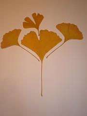 Leaves- Initial pattern (Rafael Vila) Tags: leaves photoshop gimp effect droste mathmap