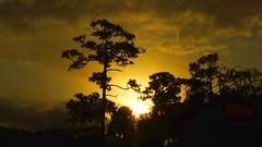Sunrise (Jim Mullhaupt) Tags: morning winter wallpaper sky sun tree night sunrise palms landscape florida bradenton southernpine mullhaupt jimmullhaupt