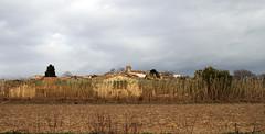 MATAJUDAICA - TRAS LAS CAÑAS (beagle34) Tags: paisaje catalunya 129 paisatge baixempordà canon7d matajudaica