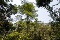 Tree Tops 0521 (Ursula in Aus) Tags: sumatra indonesia unesco bukitlawang gunungleusernationalpark earthasia