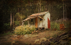 Tassie Shack (suemartin664) Tags: abandoned bush cabin australia shack wilderness suemartin