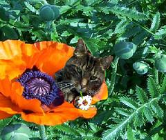 Pot pourri floral 23, avec Roméo