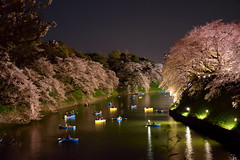 Boating around the illuminated blooming Cherry trees.. (Shubhashish Chakrabarty) Tags: japan tokyo nikon boating 桜 cherryblossom 日本 東京 nikkor 夜桜 ニコン nikond5300