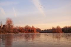 Iced Over Winter (green2mm1) Tags: trees winter sky cold ice birds landscape open bare v