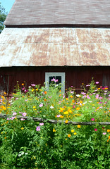 Summer at Home (irishemilyrose) Tags: flowers summer flower nature barn rural garden colorful country rustic wildflowers blossoming tinroof blooming barnboard