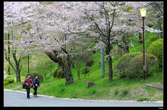nEO_IMG_DP1U3771 (c0466art) Tags: park old trip travel flowers light green castle pool beautiful japan canon season spring scenery afternoon bloom sakura 2015 trres 1dx c0466art