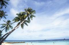 The tree on Maafushi-II (neelabh75) Tags: blue white film beach june landscape island sand nikon fuji coconut turquoise sigma slide 28 analogue 24mm f80 50 maldives provia e6 2015 ctree maafushi ishoot neelabh mafushi
