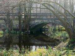 Arches (yvonnepay615) Tags: panasonic lumix gh4 bridge lynford norfolk eastanglia uk platinumheartaward