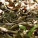 Rattlesnake - Indian Creek, BNR