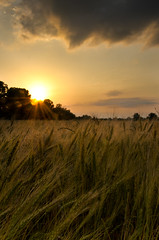 The Wind Blows Through a Wheat Field at Sunset (photographyguy) Tags: sunset oklahoma field wheat agriculture bixby amberwavesofgrain