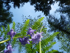 Nadir (Giles Watson's poetry and prose) Tags: bluebells poetry poem ferns