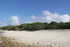 Lady Musgrave Island (158) (Lawrence Wang ) Tags: australian aus  greatbarrierreef  ladymusgraveisland         digitalshare