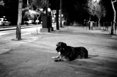 . (boklm) Tags: leica bw film fuji athens greece neopan neopan1600 2010 leicam6 fujineopan1600
