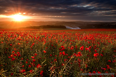 Poppies Sunset (JamboEastbourne) Tags: sunset england seagulls downs sussex brighton stadium south east poppies sunburst southdowns amex falmer downland brightonandhovealbion