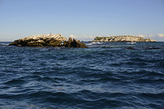 Rottnest collection 2