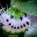 "Happy Caterpillar<br /><span style=""font-size:0.8em;"">The spots on this caterpillar bring out a nice Happy Face!!</span> • <a style=""font-size:0.8em;"" href=""http://www.flickr.com/photos/18570447@N02/9248358118/"" target=""_blank"">View on Flickr</a>"