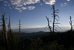 Transition (Reptilian_Sandwich) Tags: blue trees wild summer sky storm mountains newmexico forest walking outdoors solitude hiking branches ceiling solidarity remote elevation distance height rugged eveninglight deadtrees landform scraggly aldoleopoldwilderness blackrange oldsnag