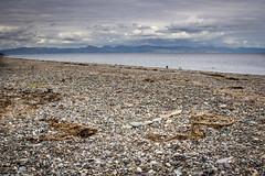 13 Peaks (Alan - WPC) Tags: sea sky seascape seaweed beach weed pebbles peaks snowdonia 13 pwllheli