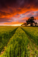 """""""Lines"""" Part II (Jonathan Combe (Thank you for 400,000 views!)) Tags: sunset sky field clouds scotland nikon"""