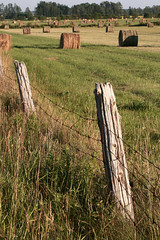 Cutting Time (peterkelly) Tags: ontario canada green field digital rural fence post northamerica hay agriculture bale mown brucecounty