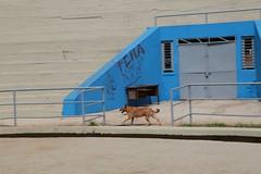 IMH_0527 (Max Hendel) Tags: dog canine cachorro canino dogslife canoneosdigital vidadeco vidadecachorro photobymaxhendel bymaxhendel fotografadopormaxhendel maxhendel photographedbymaxhendel pormaxhendel canoneosphoto photographermaxhendel maxhendelphotography