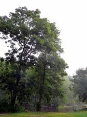 An der Saale (SabineausL) Tags: morning germany deutschland lumix thringen panasonic morgen germania morgens dbritschen dmctz4 panasonicdmctz4 sabineausl