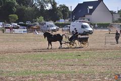 DSC_0083 (- MB Photo -) Tags: de cheval des 09 labour concours 07 vache tracteur vaches chevaux bourg comice agricole comptes 2013 bourgdescomptes |labourer