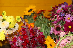 Future Growers 2013 (Soil Association) Tags: flowers food flower nature vegetables fruit organics natural farm farming grow soil growing organic apprentice coleshill futurefarmers growers organicfarming soilassociation abbeyhomefarm soilassociationorganicapprenticeshipscheme westmillorganics