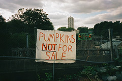 || NFS. || (Roo Lewis) Tags: urban london film sign 35mm vintage pumpkin point town lomo shoot kodak farm north lewis 400 t5 portra yashica roo t4 c41 kentish roolewis