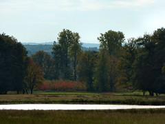 Wildpark Dlmen - View (joeke pieters) Tags: autumn fall forest woodland germany landscape deutschland pond woods view herfst uitzicht bos duitsland landschap vijver wildparkdlmen panasonicdmcfz150 1110918