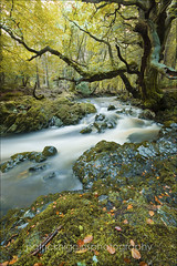 Tullymore Forest Park (Patrick Higgins Photography) Tags: park autumn trees ireland water leaves forest landscape long exposure tullymore