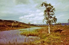 Sulitjelmafjell (kadege59) Tags: seascape nature norway analog landscape norge fantastic europa europe natur north norden norwegen arctic landschaft attractions ohhh arcticcircle nationalgeographic polarkreis arktis fantasticnature naturschauspiel arcticnorway worldtrekker nordiclandscapes kadege59