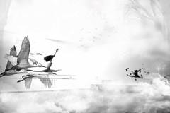 sera el destino (Mauricio Silerio) Tags: ballet birds photomanipulation dance ballerina danza dancer pajaros baile bailarina bolshoi fotomanipulacion mauriciosilerio