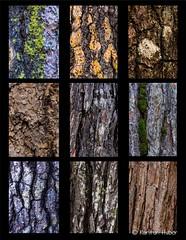 Yosemite - Conifer Bark Panel #2_ (www.karltonhuberphotography.com) Tags: trees texture colors closeup project moss panel patterns details treetrunk bark yosemite treebark isolation yosemitenationalpark pinetrees yosemitevalley conifer nikkor105mm 2013 nikond7000 karltonhuber