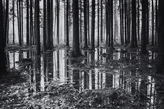 Code barre (photofabulation) Tags: wood trees bw water forest switzerland eau europa suisse flood nb arbres fort bois inondation vaud erope romandie troncs truncs canoneos5dmarkiii